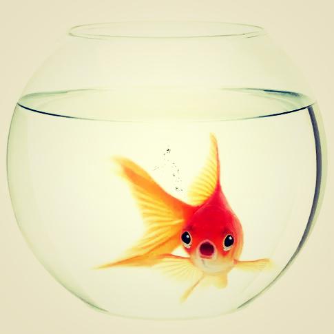 protagonistas vivem num pequeno aquário